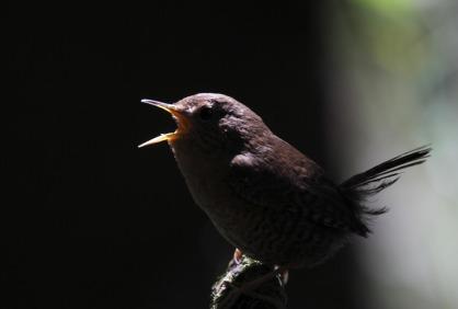 bird_singing_in_the_dark